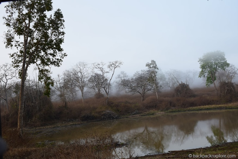 Lake at Bandipur National Park and Tiger Reserve | Bandipur Safari