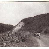 n029-011-1966-tabor-sikfokut.jpg