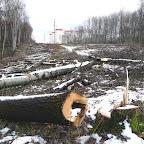 Вырубки ЛЭП в Воронежской Нагорной Дубраве 031.jpg