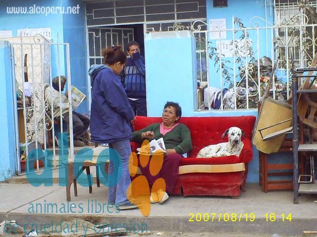 1era visita asistencia animales damnificados terremoto  Pisco 2007 (1)