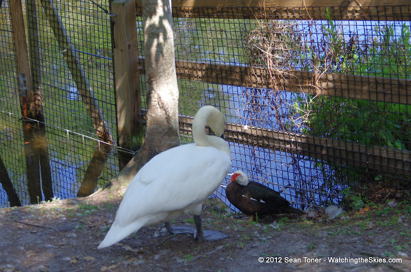 04-07-12 Homosassa Springs State Park - IMGP0030.JPG