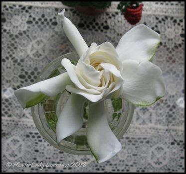 04-21-gardenia3