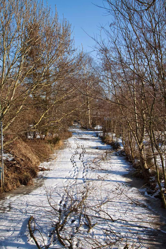 Winter - Winter-091.jpg
