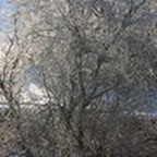 tn_lachaux-2010-12-25.jpg