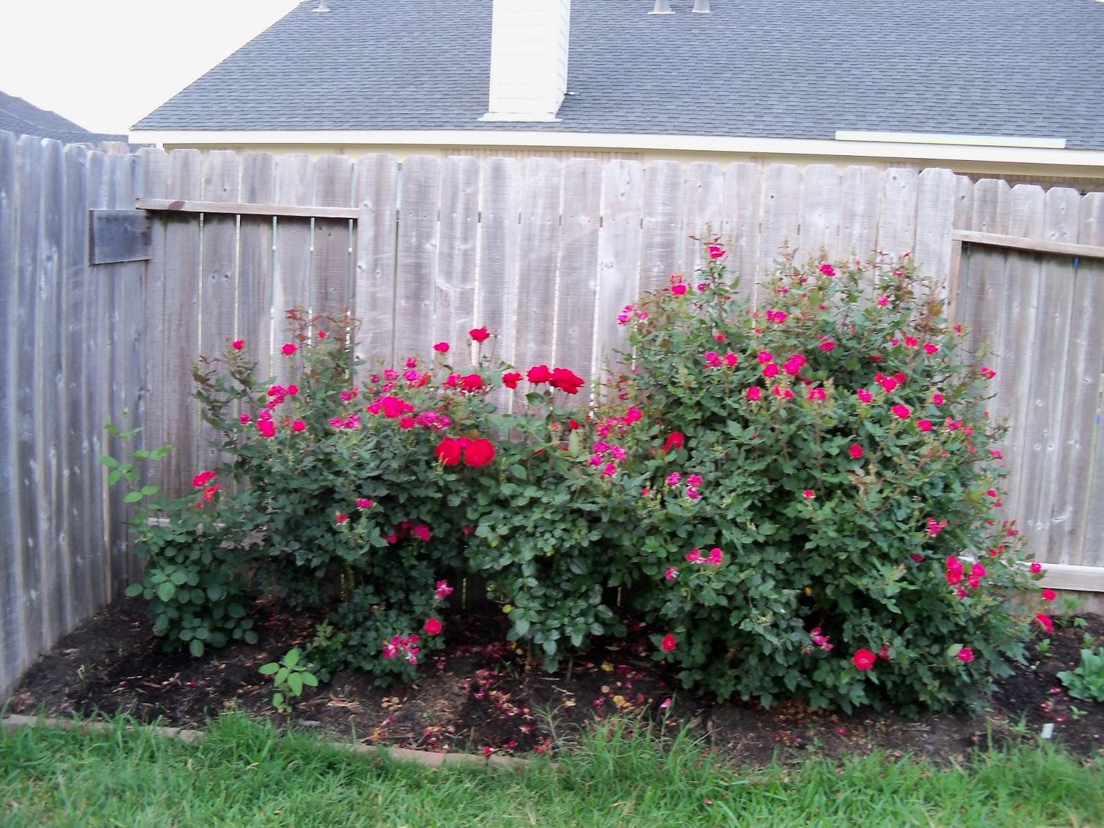 Gardening 2011 - 100_7759.JPG