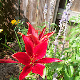Gardening 2014 - 116_3240.JPG
