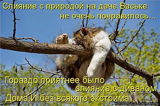 1447398838_kotomatricy-21