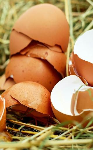 Memanfaatkan Cangkang Telur Untuk Pupuk Tanaman