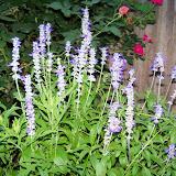 Gardening 2014 - 116_3142.JPG