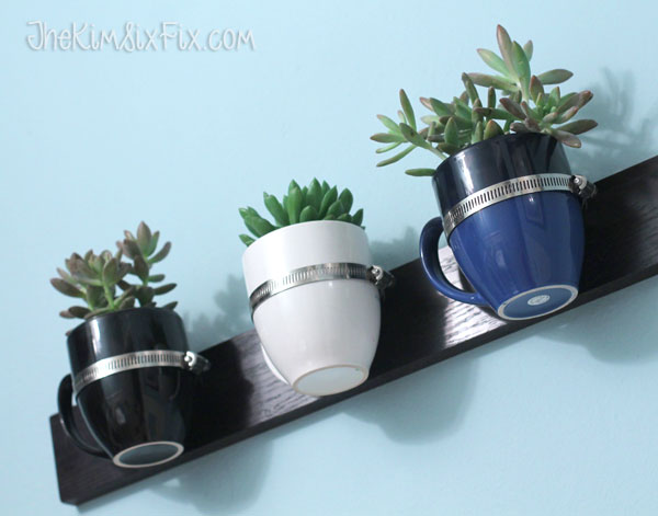 Succlent planter from coffee cups