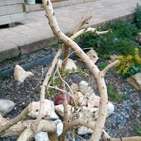 primavera-luminasioIMAG0189.jpg