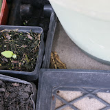 Gardening 2012 - IMG_2848.JPG