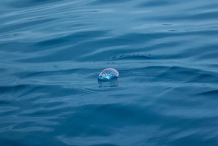 Whales06.jpg