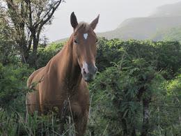 Good looking horse.