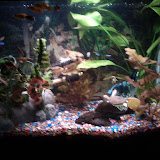 Fish - IMG_20120930_211407.jpg