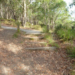 Stepped track in Green Point Reserve (389582)
