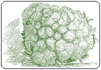คำศัพท์ภาษาอังกฤษ_cauliflower_Vegetable