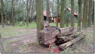 camping-molhes-da-barra-fredy-3