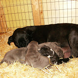 Star & True Blues February 21, 2008 Litter - HPIM0963.JPG