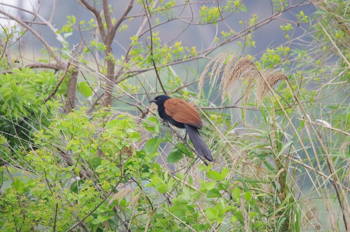 金門 (上) - 叉尾太陽鳥