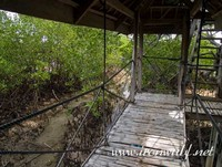 Thumbnail image for Tulapos Marine Sanctuary and Mangrove Tree House
