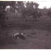 n010-023-1966-tabor-sikfokut.jpg