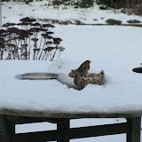 Winterkiekjes Servicetv - Ingezonden%2Bwinterfoto%2527s%2B2011-2012_50.jpg
