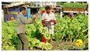 DSC_0014_keralapix.com_banana market