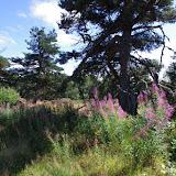 Paulhac-en-Margeride, 1230 m (Lozère), 19 août 2013