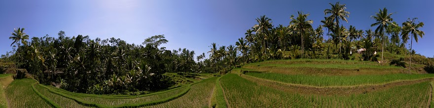 Photo: Indonesia, Bali, Ubud, Rice Terrace