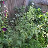 Gardening 2014 - 116_3419.JPG