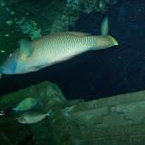 Downtown Aquarium - 116_3892.JPG