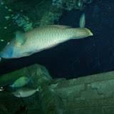 Downtown Aquarium - 116_3892.JPG