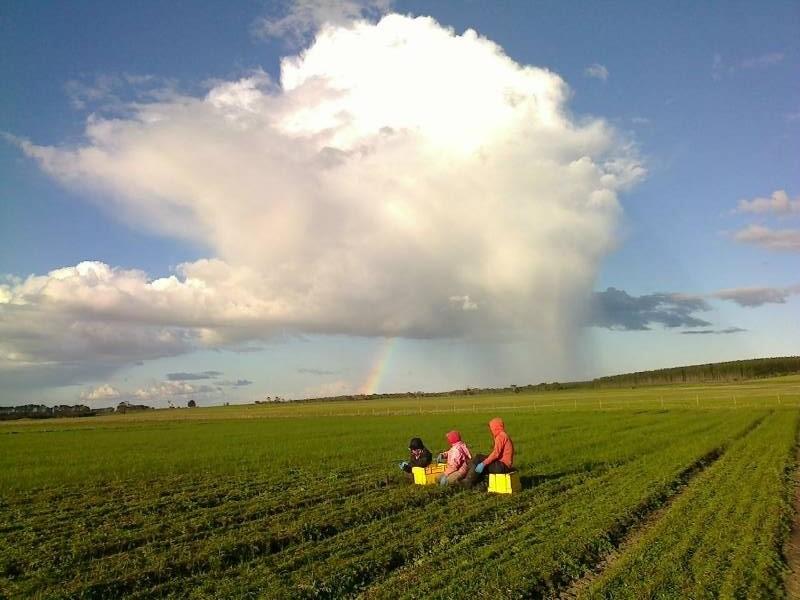 Rainbow Troopers