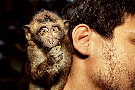 Popo the monkey
