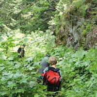Dosewallips Backpack July 2013 - CIMG3996.JPG