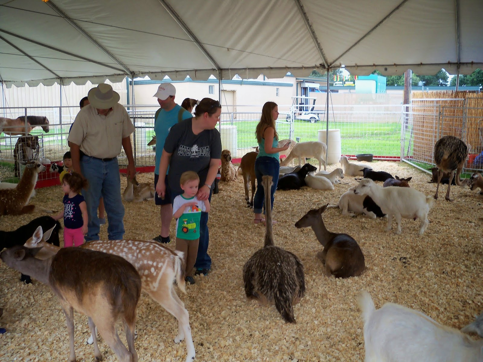 Fort Bend County Fair 2014 - 116_4332.JPG