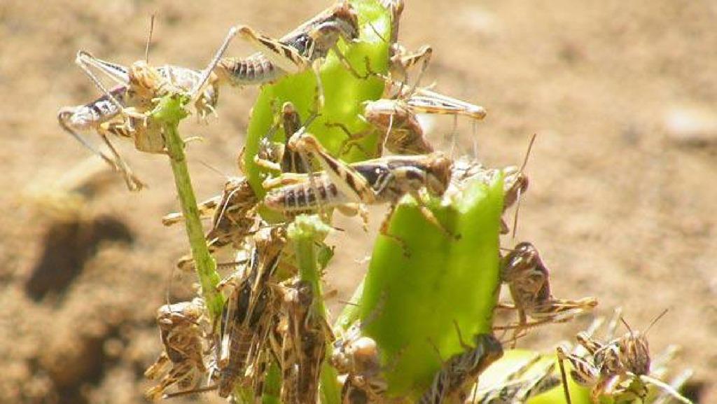 [Locust-Damage%5B4%5D]