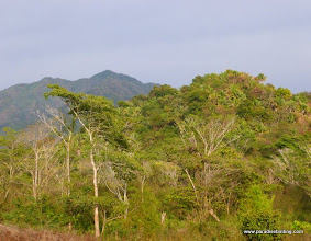 Photo: Evening light on the jungles along the Birders' Highway