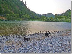Bubba and Skruffy at waters edge, Rogue River, Huntley Bar at Huntley Park