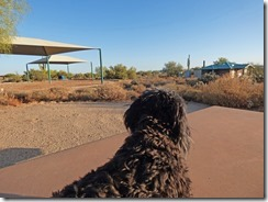 Skruffy looking out over Cave Creek Regional Park