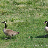 05-11-12 Wildlife Prairie State Park IL - IMGP1563.JPG