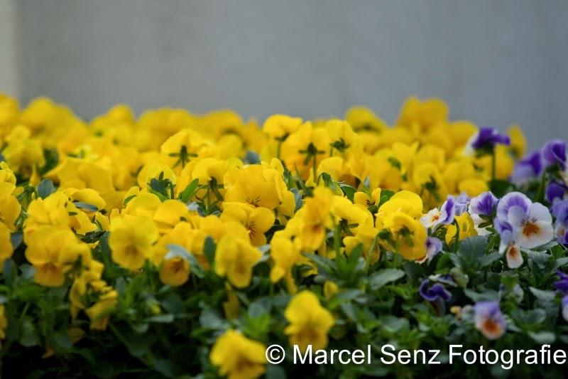 Primavera  Lentemarkt 2014