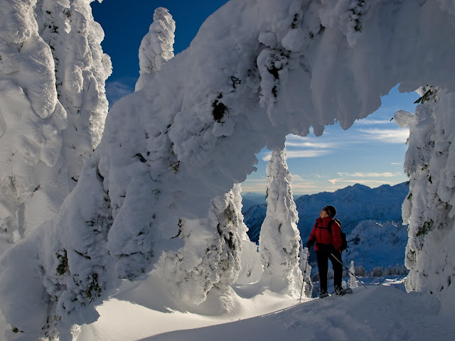 Snow-encrusted trees arch over a snowshoer at Artist Point / Credit: Grant Meyers