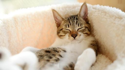 Cute Cat Live Wallpaper: fondos de pantalla hd capturas de pantalla 5
