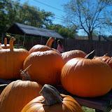 Pumpkin Patch 2014 - 116_4419.JPG