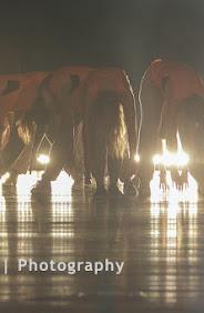 Han Balk Dance by Fernanda-3058.jpg