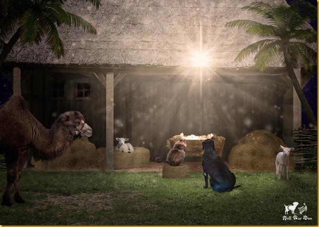 Matilda, Matt & Baby Jesus 2018 (©Bell Fur Zoo)