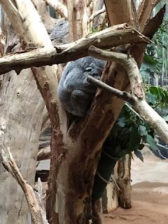 Lieblingsplätze in meiner Stadt - Teil 2: Zoo Leipzig