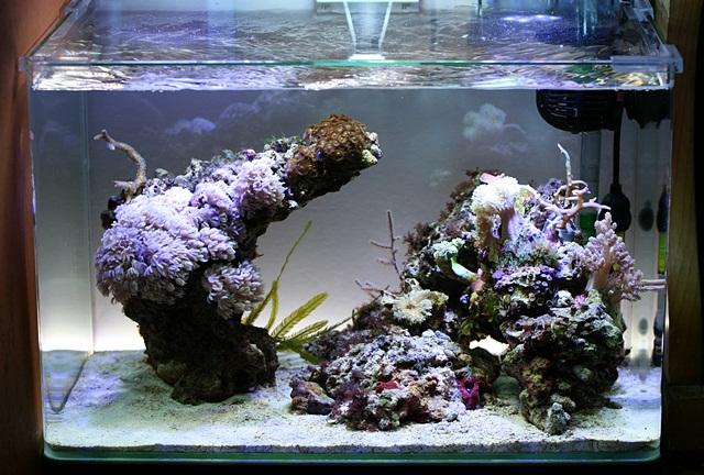 2 SaltyCocoon vervolg    Aquarium idee